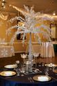 Whie Feathers Events and Crystal Trees